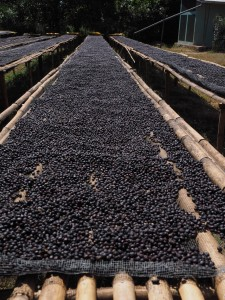 Coffee process bean market