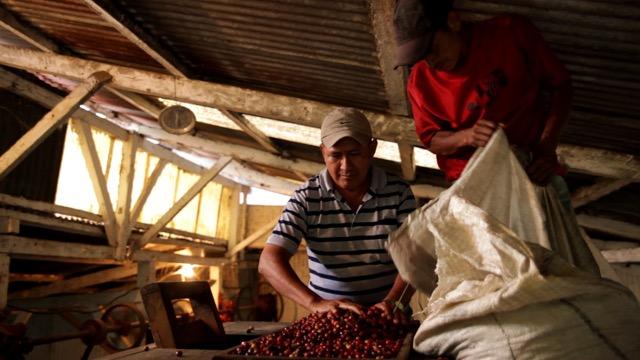 El Platanillo - Processing Bean Market