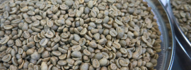 Coffee farming bean market