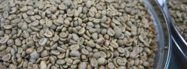 Coffee farming bean market