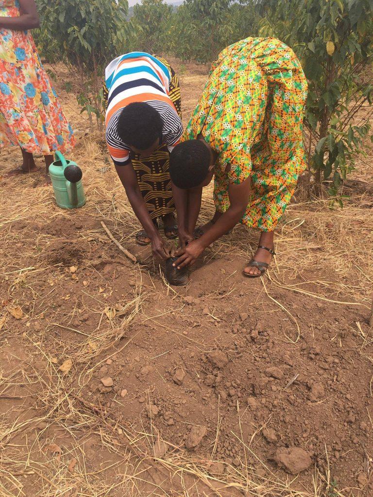 Twongere Umusaruro Planting Seedlings Rwanda