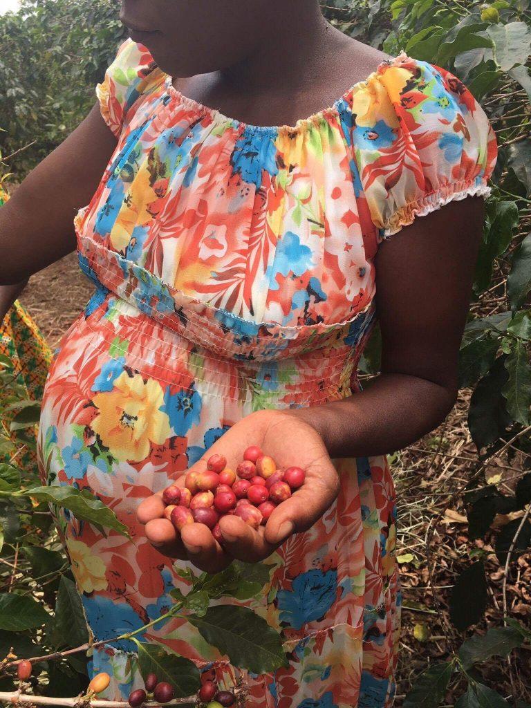 Twongere Umusaruro Seeds Rwanda